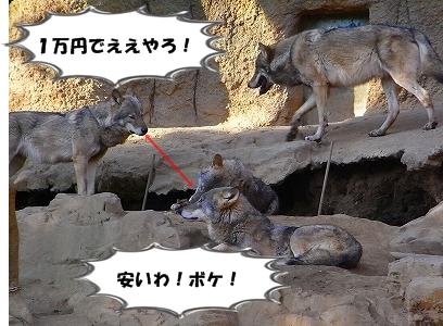 s-RIMG0951.jpg